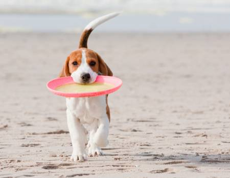 Sanibel Island Pet-Friendly Rentals
