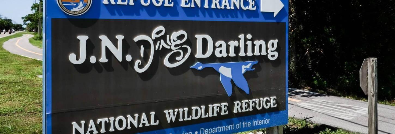 Ding Darling sign