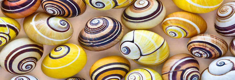 Shell Museum Sanibel Island