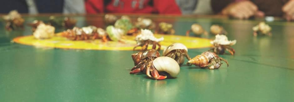 Tween Waters Crab Races
