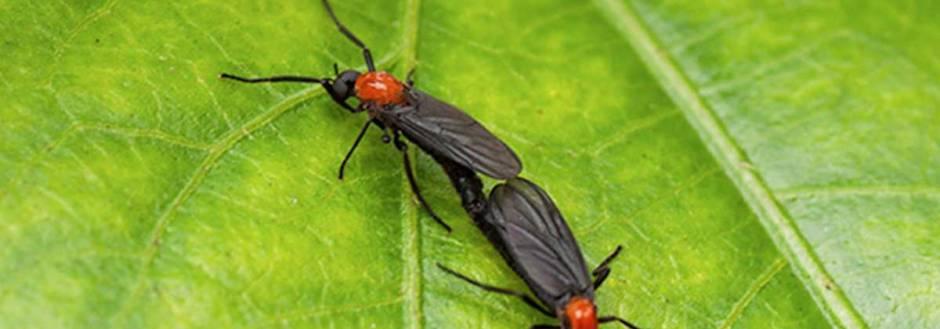 love bugs on a leaf