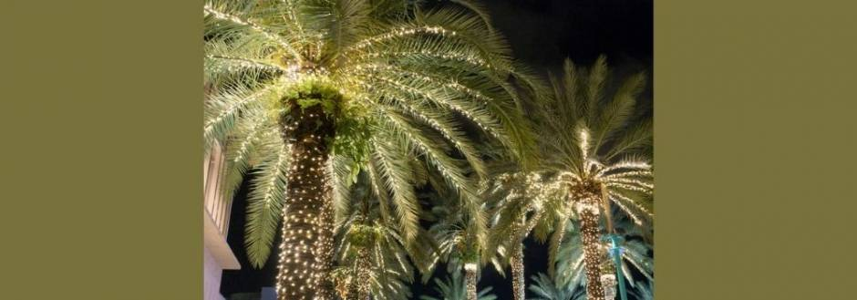 Palm trees with holiday lights