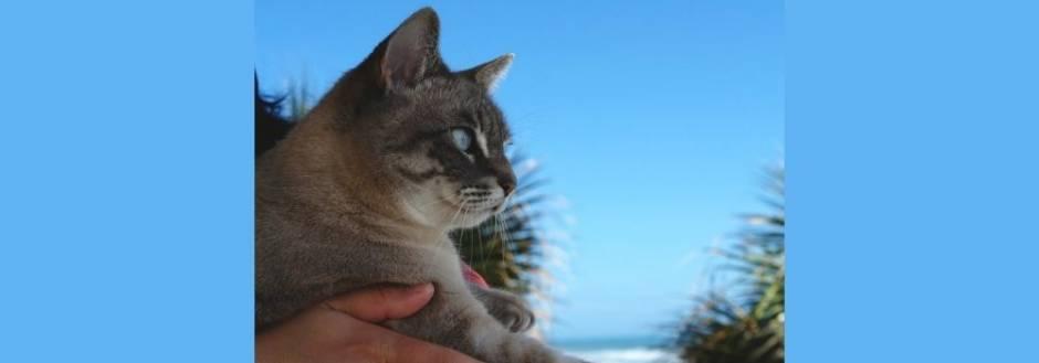 Cat near beach