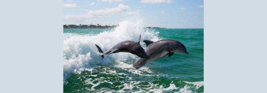 Dolphins on the Triller boat ride