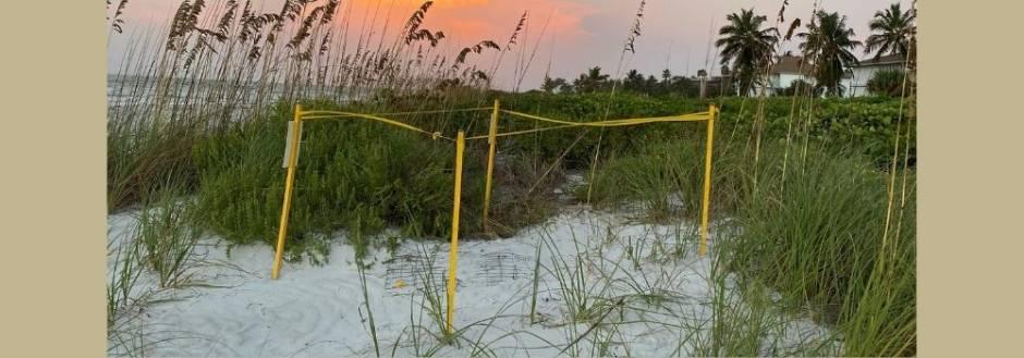 Sea turtle nest at sunrise