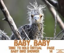 Ding Darling Virtual Baby shower, baby bird