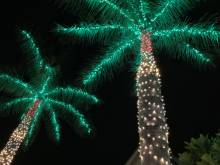 Community Church tree Luminary lights