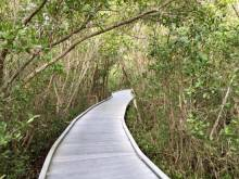 Sanibel Lighthouse walkway through the trees