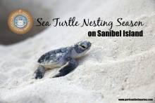 SCCF Sea turtle