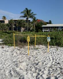 Sea Turtle Nest