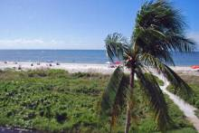 Sanibel view with palm tree