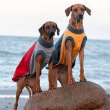 Dogs in winter coats on Beach