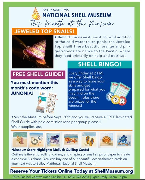 Bailey Matthews Shell Museum Flyer