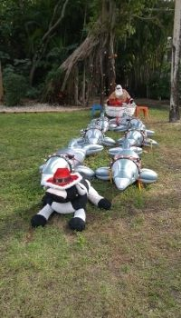 Santa and his eight flying dolphins (led by The Island Cow) at The Island Cow